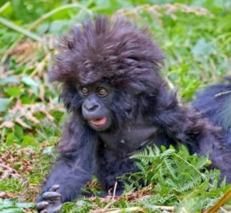 monkey hair