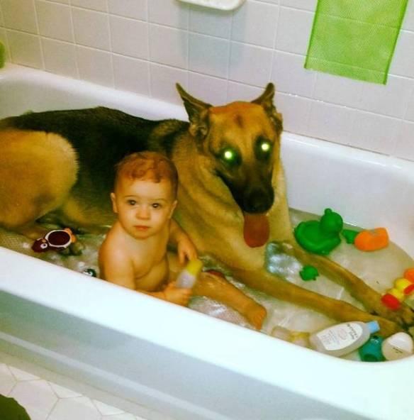 w630_Laser-Dog-in-Bath-Tub-1374865541-2